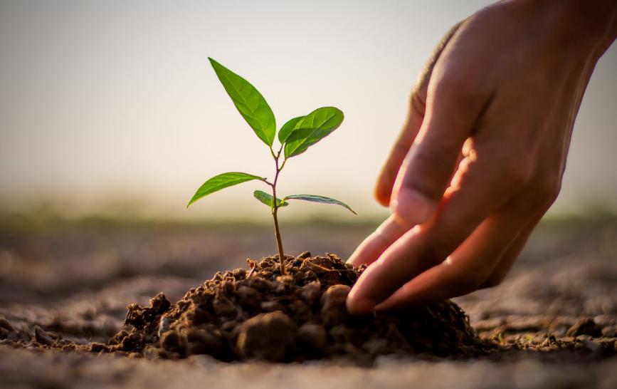 3 Alasan Kamu Wajib Menanam Pohon Sebanyak Mungkin